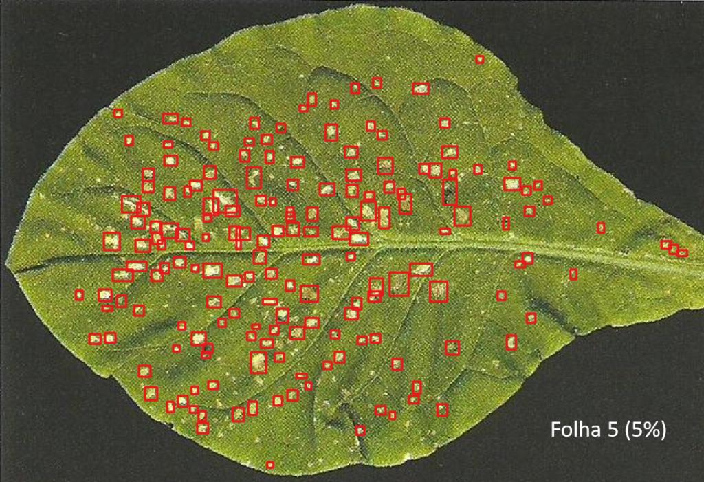 Figura 2: Fotos dos polígonos que demarcam as necroses com base no YOLOV3. Foto retirada do protocolo VDI (2003) e modificada pela Scicrop.